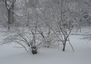 snowstorm, February 10, 2010